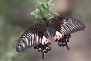 butterflies go free4