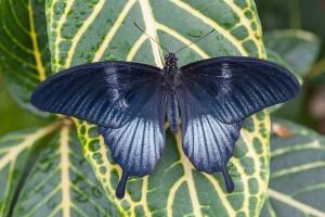 butterflies go free3