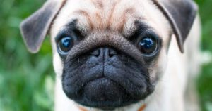 10 Tips for Caring for a Pet During the COVID-19 Pandemic