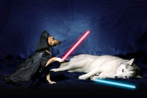 Star Wars: May the 4th be with you…and your pet!