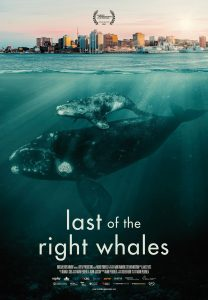 LAST OF THE RIGHT WHALES to make its world premiere at Calgary International Film Festival