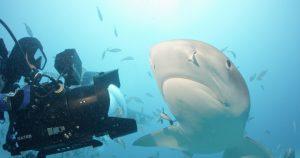Sharkwater Extinction @ Festival du Nouveau Cinema